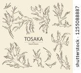 collection of tosaka  laminaria ... | Shutterstock .eps vector #1255088887