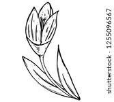 tulip icon. vector illustration ... | Shutterstock .eps vector #1255096567
