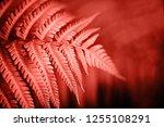 beautiful fern leaves foliage.... | Shutterstock . vector #1255108291
