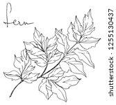 vector cacti floral botanical... | Shutterstock .eps vector #1255130437