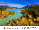 golden autumn in the birch and... | Shutterstock . vector #1255133767