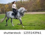 young woman with a horse for a... | Shutterstock . vector #1255143961