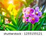 Orchids Floral Flower Blurred Bokeh - Fine Art prints