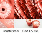 creative collage in living... | Shutterstock . vector #1255177651