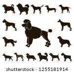 dog breeds black icons in set...   Shutterstock .eps vector #1255181914