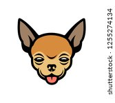 chihuahua face   isolated... | Shutterstock .eps vector #1255274134