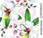 wildflower orchid flower... | Shutterstock . vector #1255298317