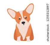 adorable pembroke welsh corgi....   Shutterstock .eps vector #1255312897