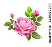 beautiful flower of pink rose...   Shutterstock .eps vector #1255351204