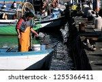 a fishermen cutting some raw... | Shutterstock . vector #1255366411