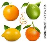 vector illustrations of citrus... | Shutterstock .eps vector #125542415