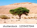 Israel  Northern Plains Negev...