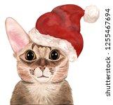 watercolor cat in a red hat   Shutterstock . vector #1255467694