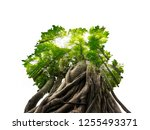 bonsai tree and forest   double ... | Shutterstock . vector #1255493371