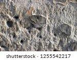 plaster wall texture... | Shutterstock . vector #1255542217