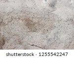 plaster wall texture... | Shutterstock . vector #1255542247