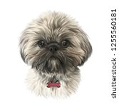 Stock photo shih tzu or chrysanthemum dog isolated on white background realistic portrait of a cute puppy 1255560181