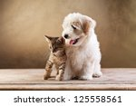 Stock photo best friends kitten and small fluffy dog looking sideways copy space 125558561