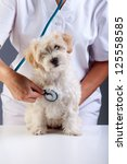 Little fluffy dog at the veterinary checkup looking funny at you - stock photo