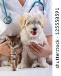 Stock photo little dog and cat at the veterinary checkup 125558591