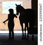 silhouette of girl leading... | Shutterstock . vector #1255595047