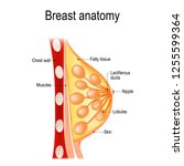 breast anatomy. cross section... | Shutterstock .eps vector #1255599364