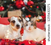 dog and cat in christmas... | Shutterstock . vector #1255632271