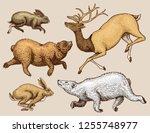 soaring hare rabbit northern... | Shutterstock .eps vector #1255748977