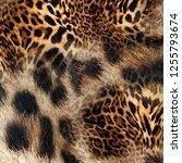 fur leopard background | Shutterstock . vector #1255793674