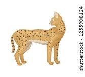 slender serval standing and... | Shutterstock .eps vector #1255908124
