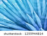 thorn leaf  abstract nature... | Shutterstock . vector #1255944814