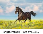 Stock photo bay horse trotting on flower spring meadow 1255968817