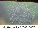 spiderweb in nature in garmisch ... | Shutterstock . vector #1256019037