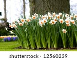 Flower Bed In Scenic Garden Of...