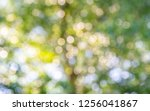 natural green bokeh abstract... | Shutterstock . vector #1256041867