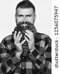 farmer shows his harvest. man... | Shutterstock . vector #1256075947