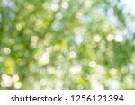 natural green bokeh abstract... | Shutterstock . vector #1256121394