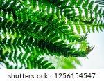 Bright  Vibrant Green  Texture...