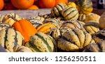 sweet dumpling squash    small...   Shutterstock . vector #1256250511