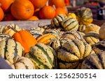 sweet dumpling squash    small...   Shutterstock . vector #1256250514