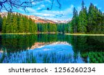 mountain forest lake reflection ...   Shutterstock . vector #1256260234
