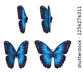 the beating of a butterfly's... | Shutterstock .eps vector #1256276311