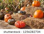 Musquee De Provence Pumpkins ...