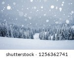 frozen white spruces on a... | Shutterstock . vector #1256362741