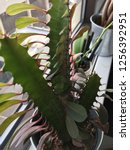 indoor plant houseplant office...   Shutterstock . vector #1256392951