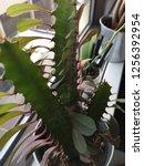 indoor plant houseplant office...   Shutterstock . vector #1256392954