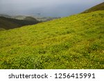 panoramic view point... | Shutterstock . vector #1256415991