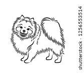 pomeranian dog    isolated...   Shutterstock .eps vector #1256553514