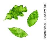 vector green watercolor natural ... | Shutterstock .eps vector #1256595481