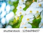 White Orchids Floral Flower Blurred - Fine Art prints